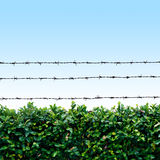 Barbed wire fence. Barbed wire above natural fence on blue sky Stock Images