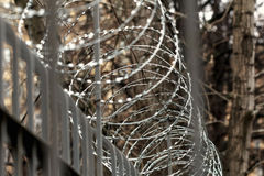 Barbed wire on fence at autumn day Stock Photo