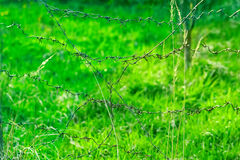 The barbed wire fence on the background of green grass Royalty Free Stock Images