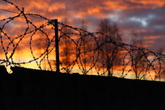 Barbed wire on the fence  the background of sunset. Barbed wire on the fence on the background of sunset Royalty Free Stock Photography