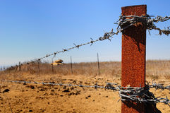 Barbed wire fence. Royalty Free Stock Photos