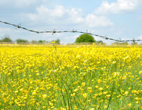 Barbed Wire Fence And Buttercup Field Royalty Free Stock Image