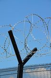 Barbed wire fence. Royalty Free Stock Photography