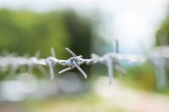 Close up barbed wire Stock Photo