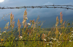 Barbed wire fence in country Royalty Free Stock Image