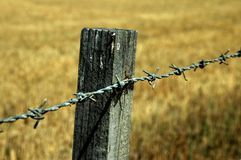 Barbed wire fence detail Stock Image