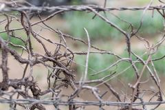The barbed-wire fence and a dried-up plants stock photo