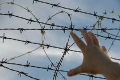 Barbed wire fence. Enclosures with barbed wire to prevent the exit (or entry royalty free stock photo