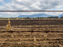 Barbed wire fence in front of a burnt out field Royalty Free Stock Images