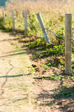 Barbed wire fence with grass Royalty Free Stock Image