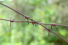 Barbed wire fence on a green background trees. Royalty Free Stock Images