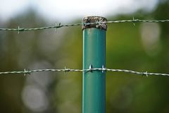 Barbed wire fence, green color, securing a site. Barbed wire fence, green color, securing private property, background out of focus royalty free stock image