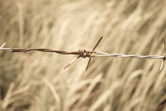 Barbed wire fence and green field Stock Image