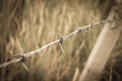 Barbed wire fence and green field Stock Photo