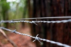 Barbed Wire fence guarding a secluded forrest stock images