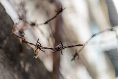Barbed wire fence lack. Symbol of danger Stock Photography
