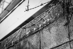 Barbed wire fence lack and white shot. Abstract barbed wire fence lack and white shot Stock Photography
