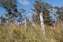 Barbed wire fence in long grass. With tall gum trees in the background Royalty Free Stock Photos