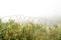 Barbed wire fence Royalty Free Stock Image