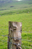 Barbed Wire Fence Post. With green pasture in background stock photo