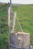 Barbed Wire Fence Post. With green pasture in background royalty free stock images