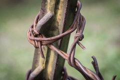 Barbed Wire Fence Post Stock Image