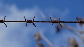Barbed wire on a fence. Prohibition caution Stock Images