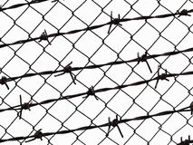 Barbed wire fence protection isolated on white. For background texture Stock Photography