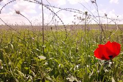 Barbed wire, fence and red flower in the foreground. royalty free stock photos