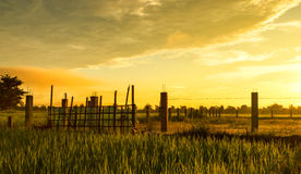 Barbed wire fence with rice paddy Stock Image