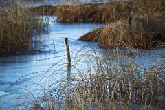 A barbed wire fence running through a wetland marsh Royalty Free Stock Photo