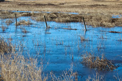 A barbed wire fence silhouette running through a frozen swamp Royalty Free Stock Images
