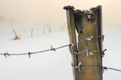 Barbed wire covered with snow Stock Photography