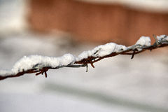 Barbed wire. Fence in the snow in winter Stock Photography