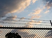 Barbed Wire Fence. A barbed wire fence with the sunset on the other side royalty free stock image