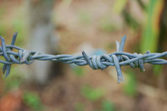 Barbed wire fence. In Thailand Royalty Free Stock Photos
