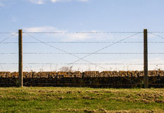 Barbed wire fence Trenches of Death flanders Dixmude great world war Royalty Free Stock Photography