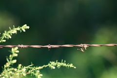 Barbed wire fence with very shallow focus - green background and weeds blurred - room for text. A Barbed wire fence with very shallow focus - green background stock image