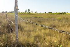A barbed wire fence with wooden post. With meadow on background in the countryside royalty free stock photo