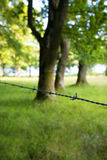 Barbed wire in a field. Close up of barbed wire in front of some trees in a field Royalty Free Stock Images