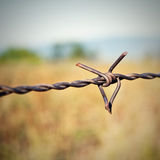 Barbed wire fragment. Royalty Free Stock Images
