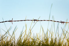 Barbed wire and grass Royalty Free Stock Images