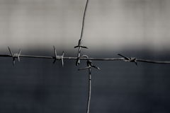 Barbed Wire on a gray background Royalty Free Stock Photography