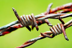 Barbed wire in a green backgro. A full close up taken with a macro lens Stock Images