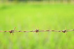 Barbed wire. On green background Stock Photography