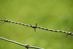 Barbed wire on green background Royalty Free Stock Photos
