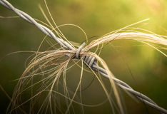 Barbed Wire Hair Stock Photo