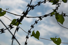 Barbed wire and heartshaped leaves Royalty Free Stock Photos