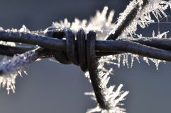 Barbed wire with hoarfrost Royalty Free Stock Photos