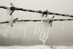 Barbed wire with ice crystals Stock Image